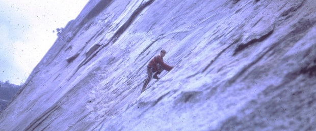 Gosling ascending a steep cliff
