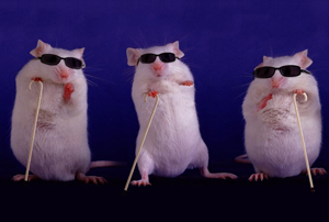 Escape from the mouse trap? New experimental models ...
