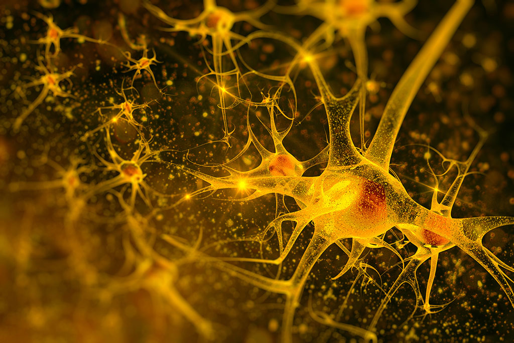 Researchers enhance neuron recovery in rats after blood flow stalls