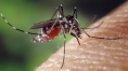 5 Questions: Taia Wang on why some develop severe dengue disease