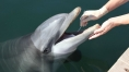 Dolphin mouths house 'dark matter of the biological world'