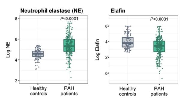 neutrophil elastase and Elafin