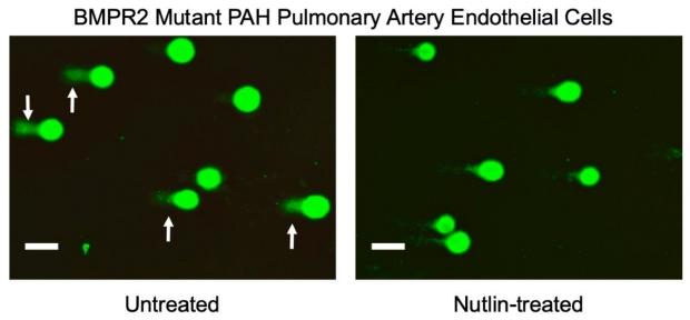 graphic of Nutlin resolving DNA damage
