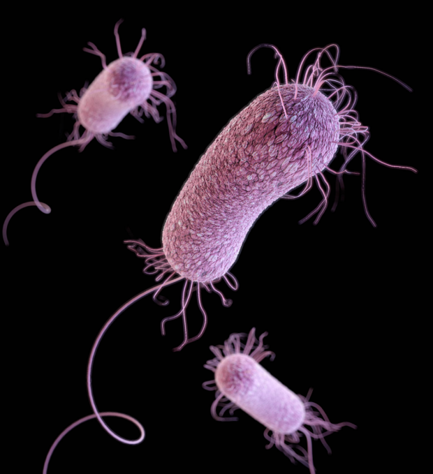 3D illustration of Pseudomonas aeruginosa