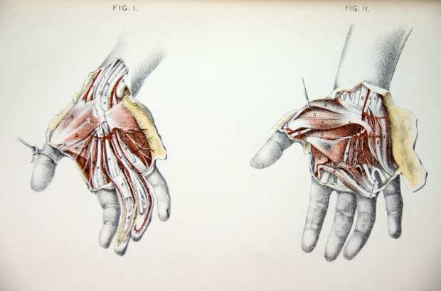 Drawing of hands peripheral nerves