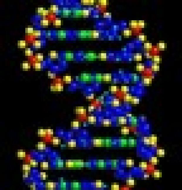 'Junk' DNA now looks like powerful regulator, Stanford researcher finds