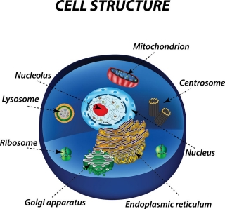 Diagram of the structures in a cell