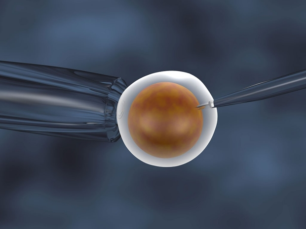 A human egg undergoing in vitro fertilization