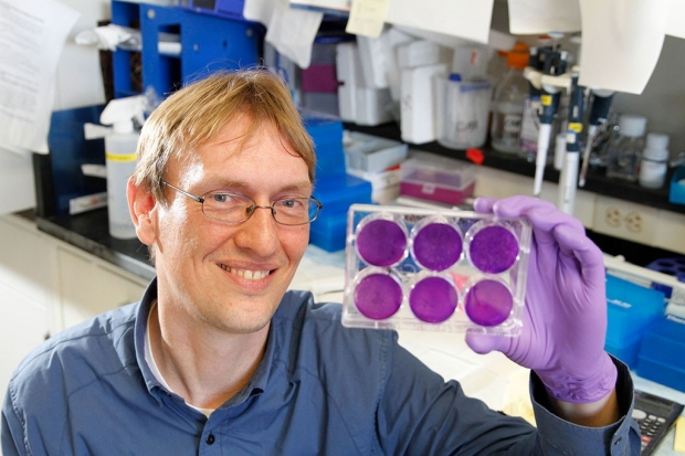 Man sitting in a lab, holding up a tray of six gels stained purple