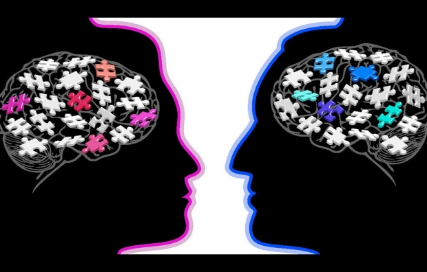Illustration of male and female brains
