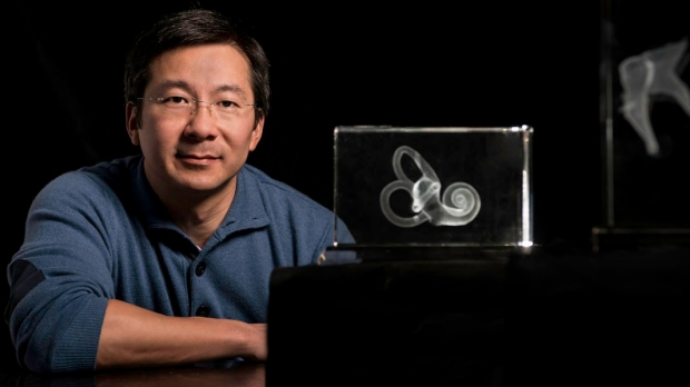 Inner ear hair cells regenerated