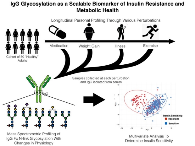 IgG Glycosylation as a Scalable Biomarker of Insulin Resistance and Metabolic Health