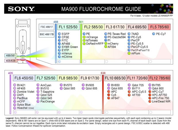 Spiderman fluorophors