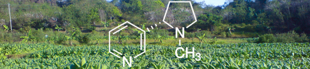 Image of the chemical formula for nicotine superimposed on tobacco leaves